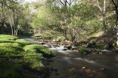 Flod Cambrones i La Granja de San Ildefonso segovia Arkivbild