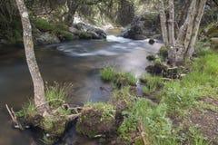 Flod Cambrones i La Granja de San Ildefonso segovia Fotografering för Bildbyråer