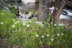 Flod Cambrones i La Granja de San Ildefonso segovia Arkivfoton