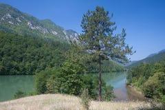 Flod Drina i Serbien Arkivbild