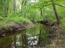 Flod eller ström med reflexion och gröna sidor och träd i skog royaltyfri fotografi