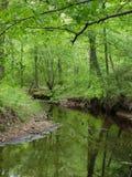 Flod eller str?m med reflexion och gr?na sidor och tr?d i skog arkivfoto