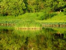 flod för 2 skog Arkivfoton