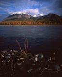 flod för berg för alaska fallliggande Royaltyfria Bilder