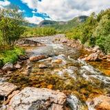 Flod för berg för Norge naturkallt vatten Royaltyfria Bilder