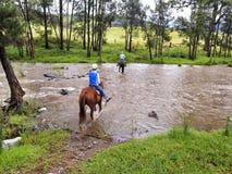 Flod för BTops hästritt royaltyfria foton