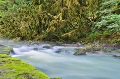 Flod för dimmigt berg Royaltyfri Fotografi