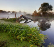 flod för gryningfiskemorgon Royaltyfria Bilder