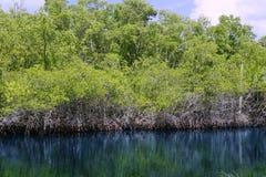 flod för mangroove för evergladesflorida liggande arkivfoton