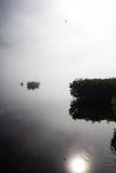 Flod för morgonmistManatee Royaltyfri Foto