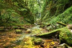 flod för naturlig park för banff Kanada kanjon Arkivfoton