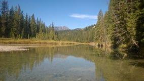 Flod för skog för träd för pilbågedalbanff berg Arkivbild