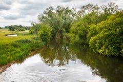 Flod Frome Holmebridge Dorset Royaltyfria Foton