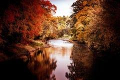 Flod-höst-träd-härlig-flod royaltyfri bild
