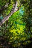 Flod i Abel Tasman National Park, Nya Zeeland Royaltyfri Foto