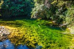 Flod i Abel Tasman National Park, Nya Zeeland Fotografering för Bildbyråer