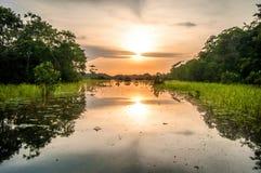 Flod i amasonrainforesten på skymning, Peru, Sydamerika Arkivfoton