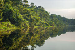 Flod i amasonrainforesten, Peru, Sydamerika Royaltyfria Foton