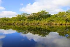 Flod i Belize, Amerika Arkivfoto