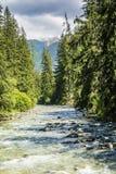 Flod i bergen mellan granar Royaltyfria Bilder