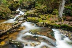 Flod i den bayerska skogen Royaltyfri Bild