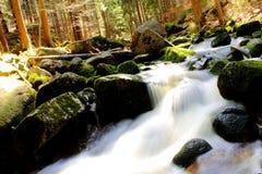 Flod i den härliga vårskogen Arkivfoton