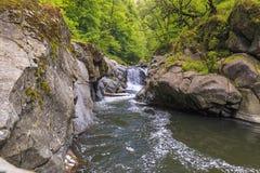 Flod i den Hirkan nationalparken i Lankaran Azerbajdzjan Arkivfoto