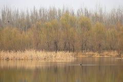 Flod i den tidiga våren Arkivfoto