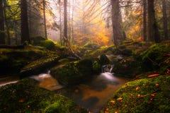 Flod i det Vitosha berget Royaltyfria Bilder