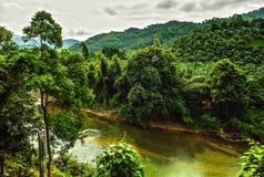 Flod i djungel Royaltyfri Fotografi