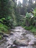 Flod i djungel Arkivfoto