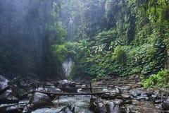 Flod i djungeln Arkivfoton