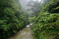 Flod i djungelvandring i den Bali Indonesien mycket gröna växter och vattenfallet Royaltyfri Fotografi