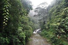 Flod i djungelvandring i den Bali Indonesien mycket gröna växter och vattenfallet Arkivfoton