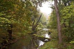 Flod i en Misty Morning Arkivbilder