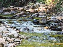 Flod i en skog royaltyfria bilder