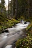 Flod i en skog arkivbild