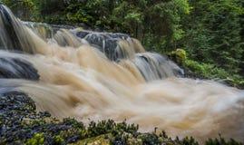Flod i en skog, Sumava Royaltyfria Foton