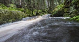 Flod i en skog, Sumava Fotografering för Bildbyråer