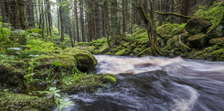Flod i en skog, Sumava Royaltyfri Foto
