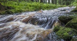 Flod i en skog, Sumava Royaltyfri Fotografi