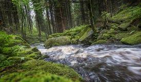Flod i en skog, Sumava - nationalpark Fotografering för Bildbyråer