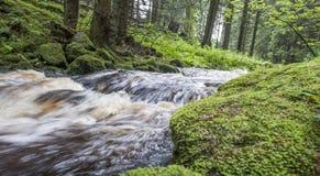 Flod i en skog, Sumava - nationalpark Royaltyfria Bilder