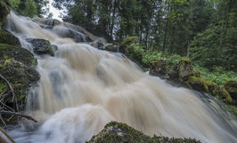 Flod i en skog, Sumava - nationalpark Arkivfoto