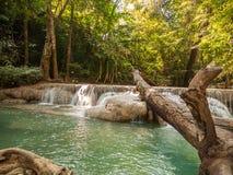 Flod i en skog, Thailand Royaltyfria Foton