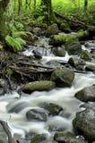 Flod i Espoonkartanonkoski Fotografering för Bildbyråer
