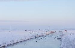 Flod i ett snöig landskap med flygfåglar Arkivfoto