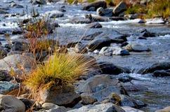 Flod i höst Royaltyfria Bilder