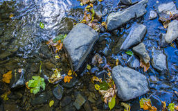 Flod i höst Arkivfoton