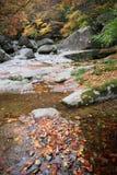 Flod i höstskog Royaltyfri Foto